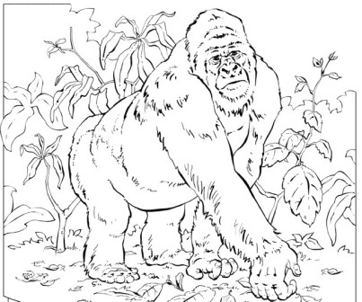 dibujo de gorila en la selva
